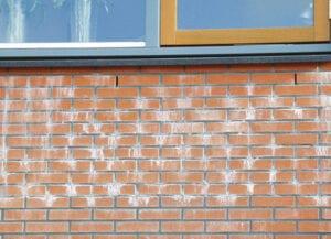 wit-poeder-zout-op-muur